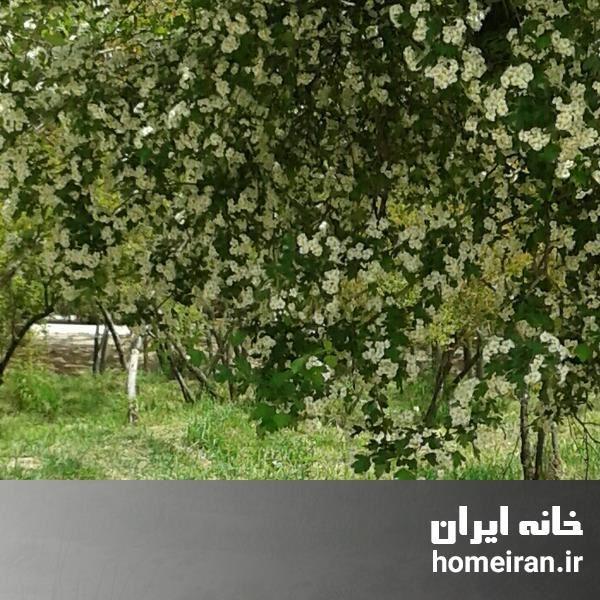 تصویر فروش خانه و ویلا تهران، پیروزی با کد 20040637